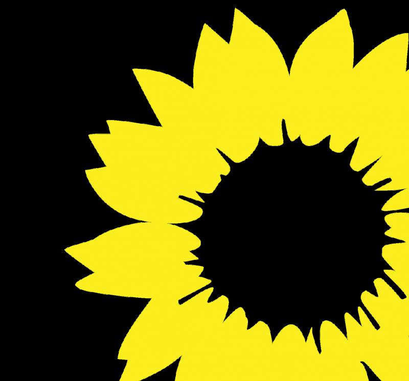 Sonnenblume_Gruene